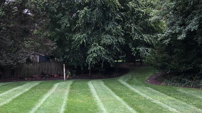 A Green, Healthy Lawn Is Just a Phone Call Away