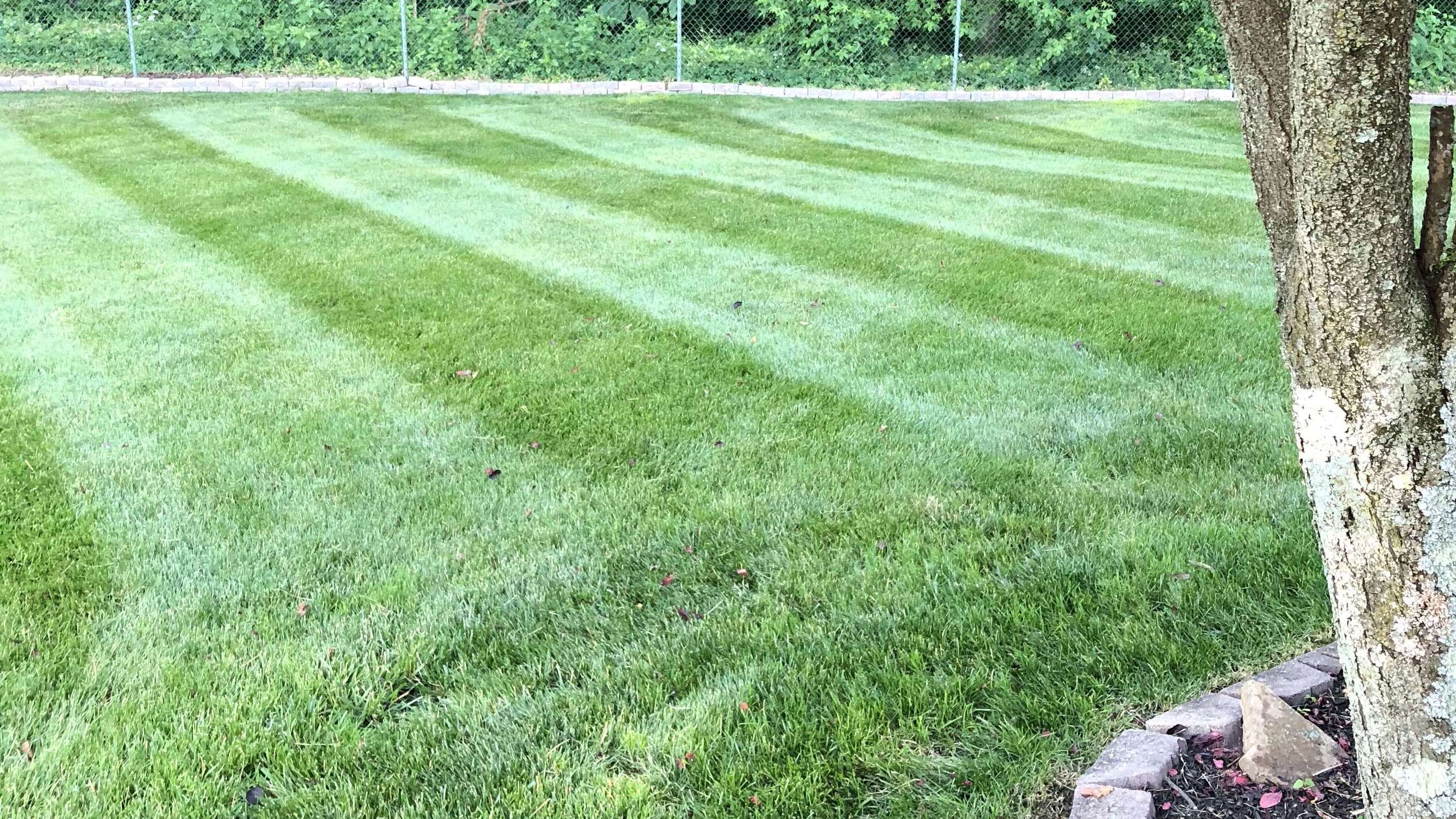 Save Green With Premier Lawn Care